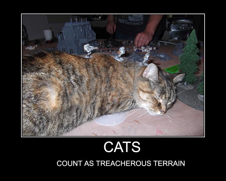 Cadians, Cat, Humor, Warhammer 40,000