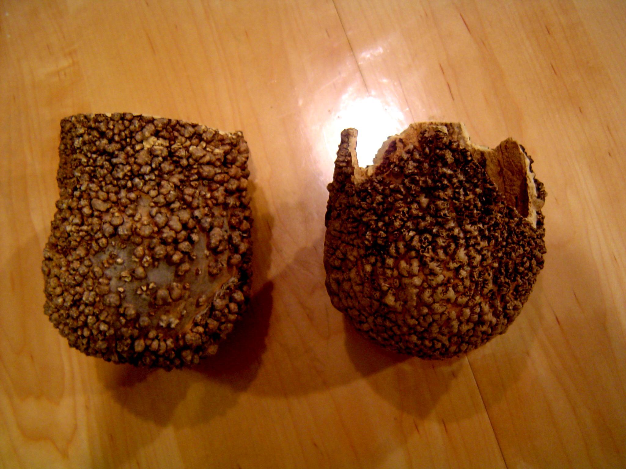 Mycetic Spores, Spore Pod, Spores, Tyranids