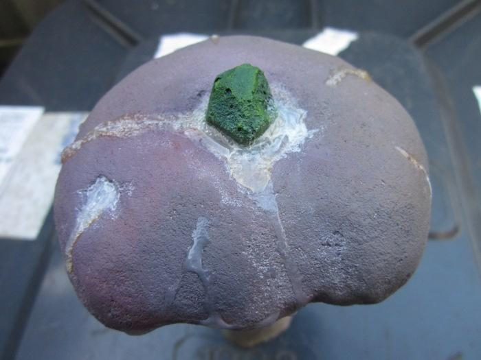 Mushroom, Terrain, Warpstone