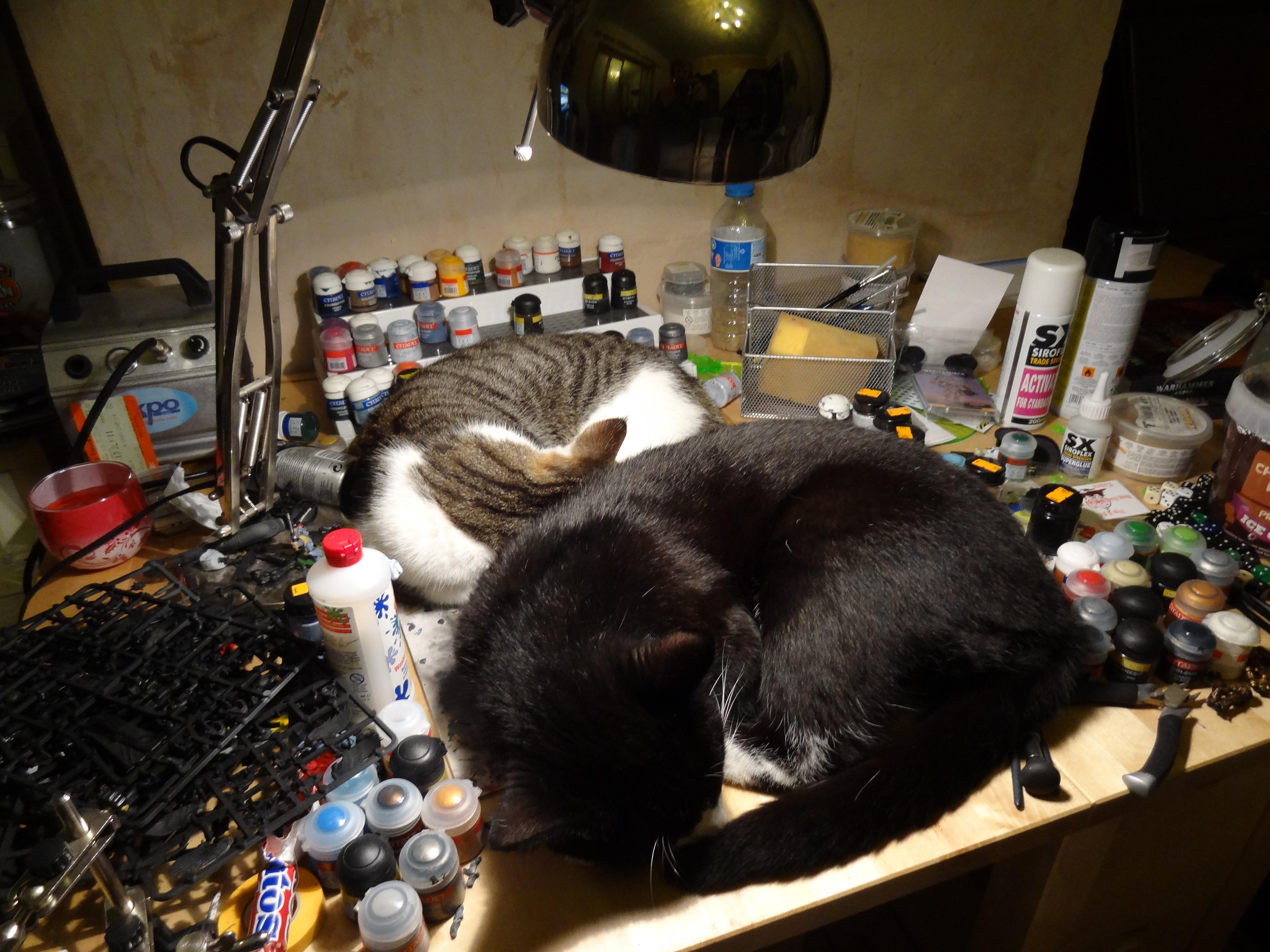 Cats, Interruptions, Paint Desk, Warhammer 40,000