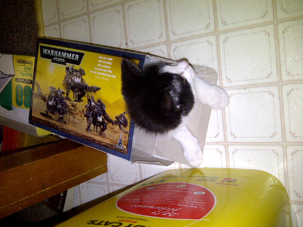 Cats, Nib, Orks, NIB orks
