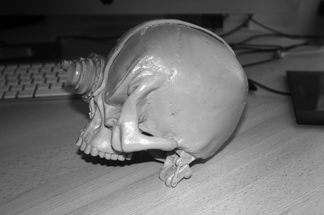 Companion Skull pic 3