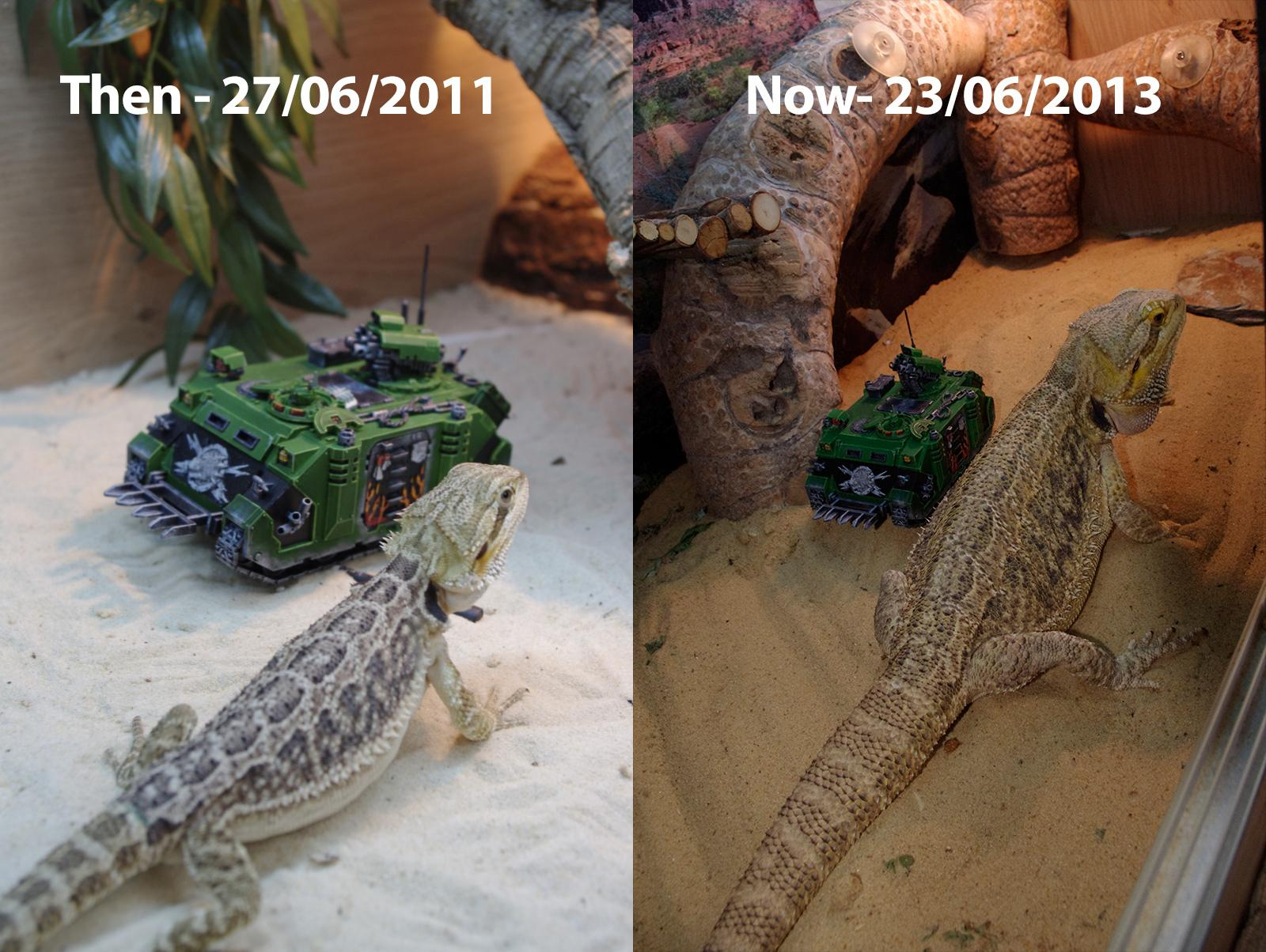 2011, 2013, All Grown Up, Cheese, Lizard, Predator, Stigweard, Warhammer 40,000